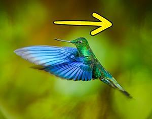 Колибрите летят назад